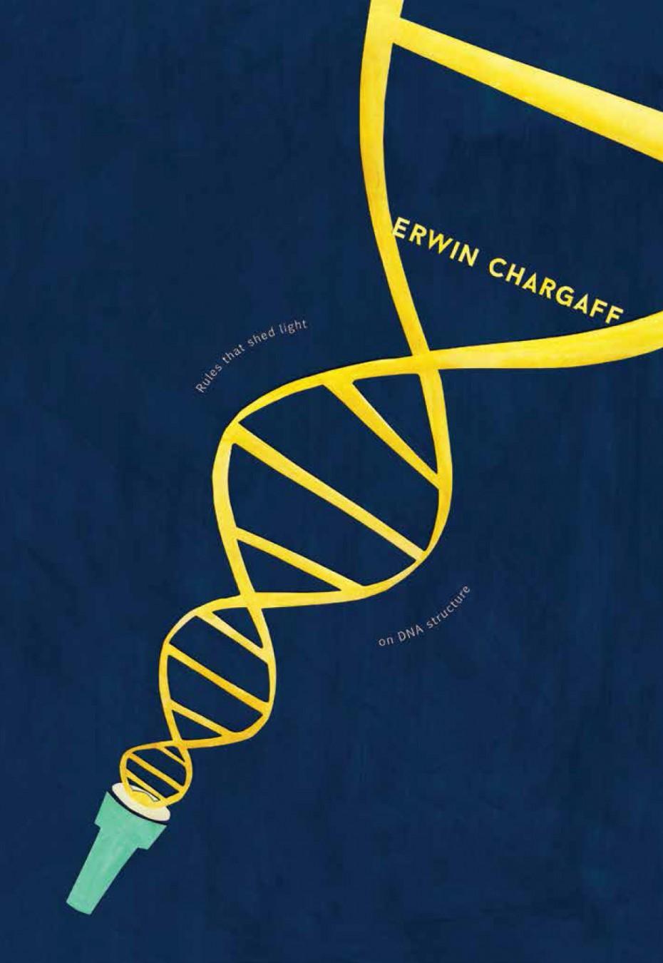 ПРАВИЛО ЧАРГАФФА – КЛЮЧ ДО ДНК